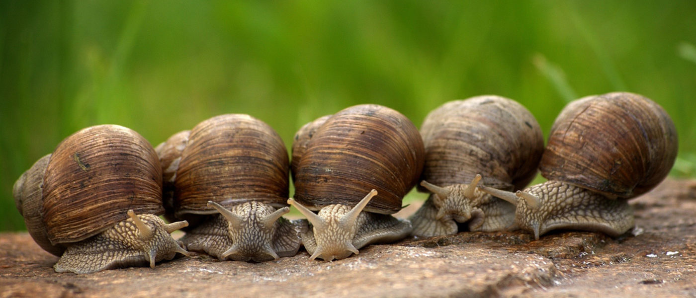 network performance issues slow snails auvik use case
